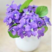 горшочек с цветком